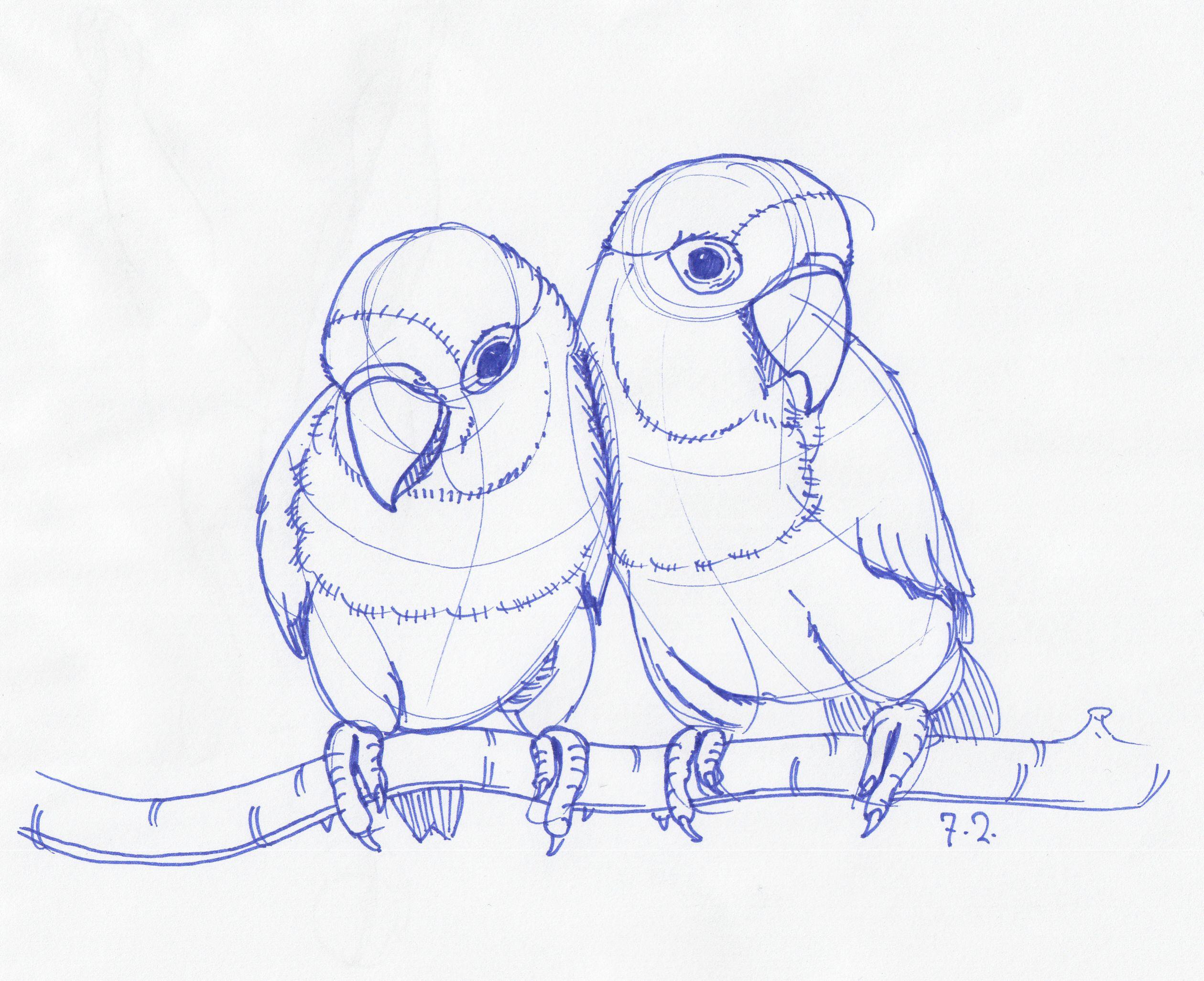 2519x2051 Pencil Sketch Of Love Birds Drawings Of Love Birds Bird Pencil