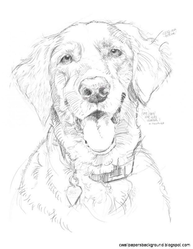 pencil drawing of a dog at getdrawings free download