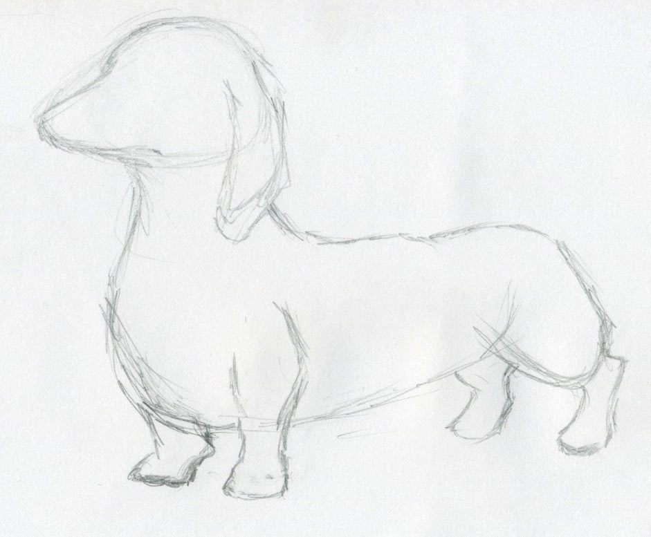 941x777 simple dog drawings in pencil