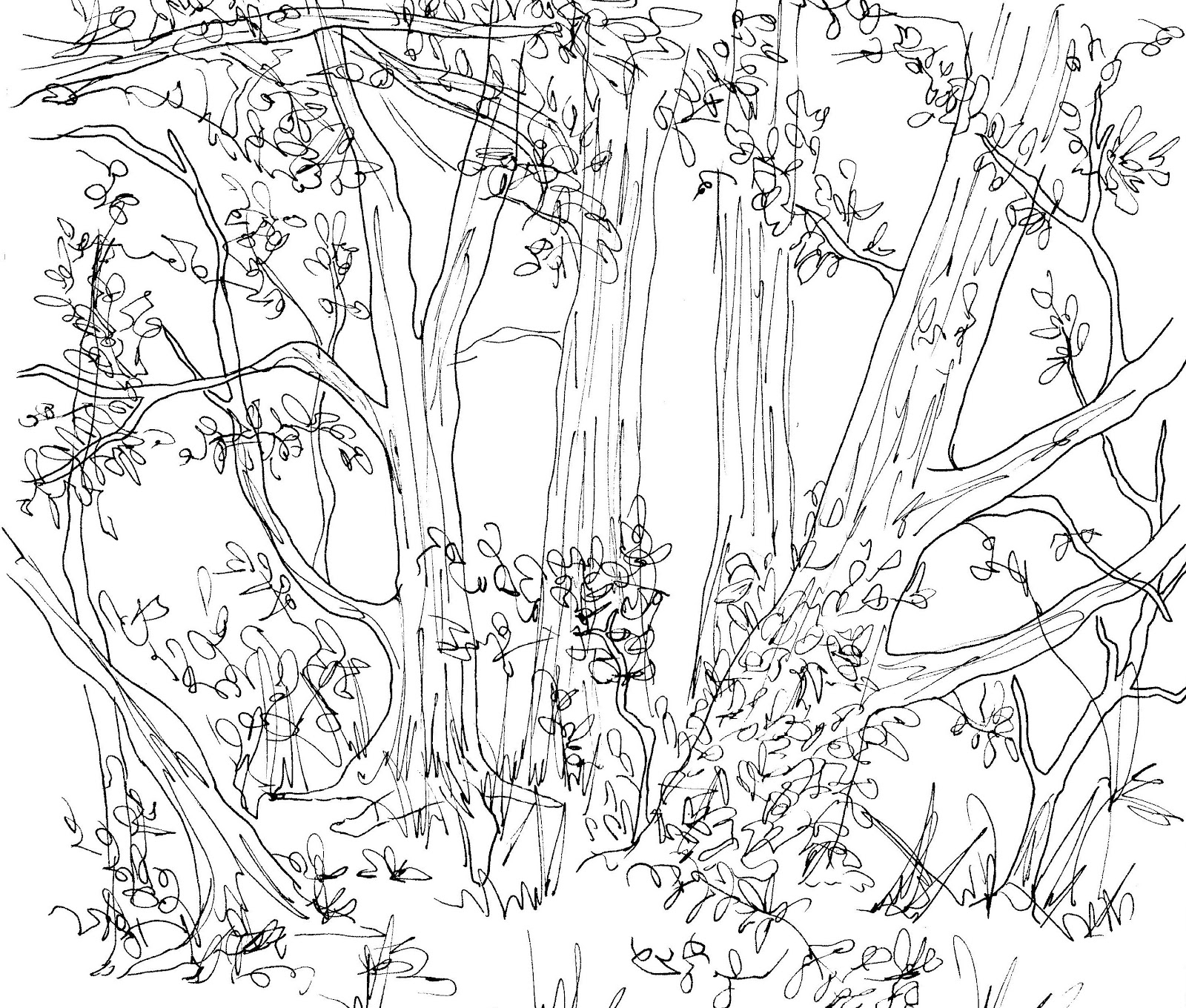 1600x1360 Forest Animals Drawing Forest Animals Drawing