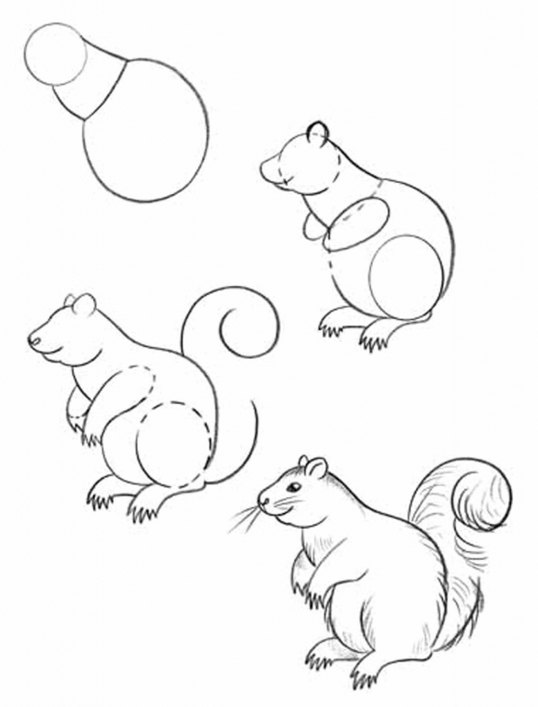 780x1024 How To Draw Forest Animals Step By Step Forest Animal Drawings