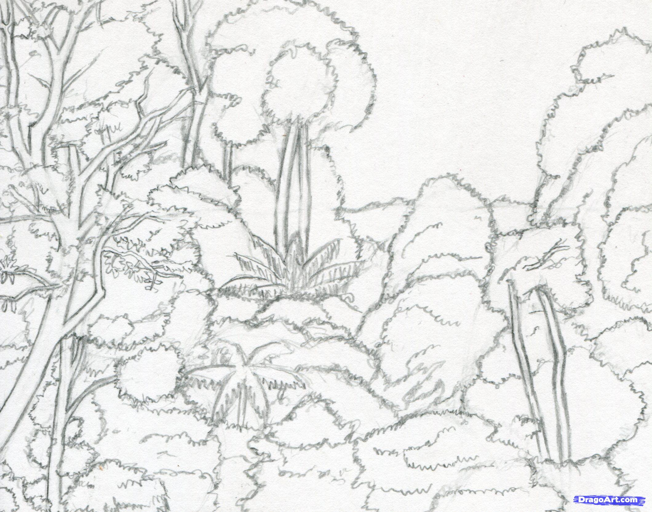 2120x1667 Drawing Of Tropical Rainforest Drawn Forest Tropical Forest