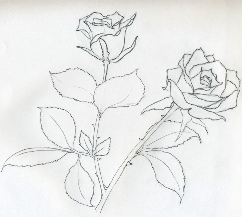 847x757 Drawn rose pencil outline