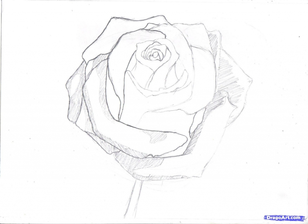 1024x744 Pencil Drawings Of A Rose How To Draw A Rose In Pencil Draw A