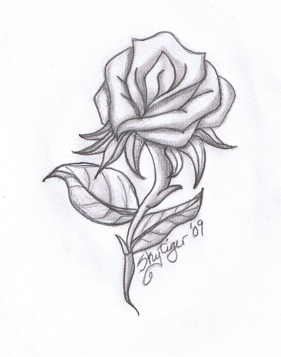 564x715 Rose Drawings Rose pencil drawing by Skytiger on deviantART