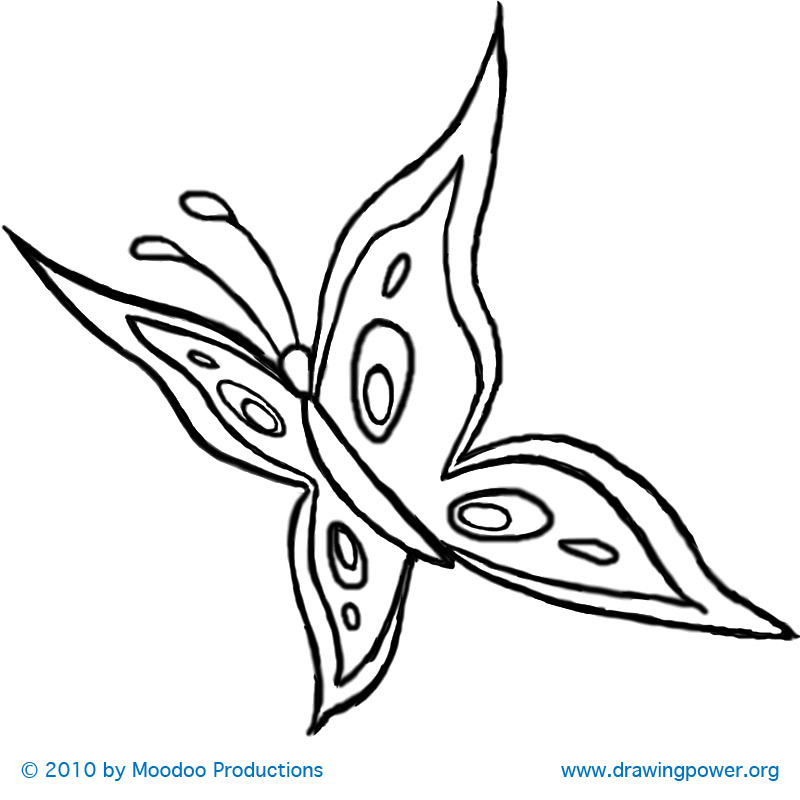 800x800 Drawn butterfly flight drawing
