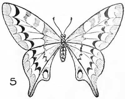 400x318 Drawn pice butterfly