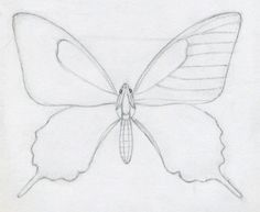 236x193 How to draw a butterfly how to draw a Pinterest