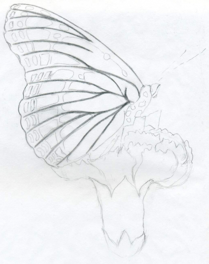 814x1024 Pencil Drawings Of Butterflies And Flowers Butterfly And Flower In
