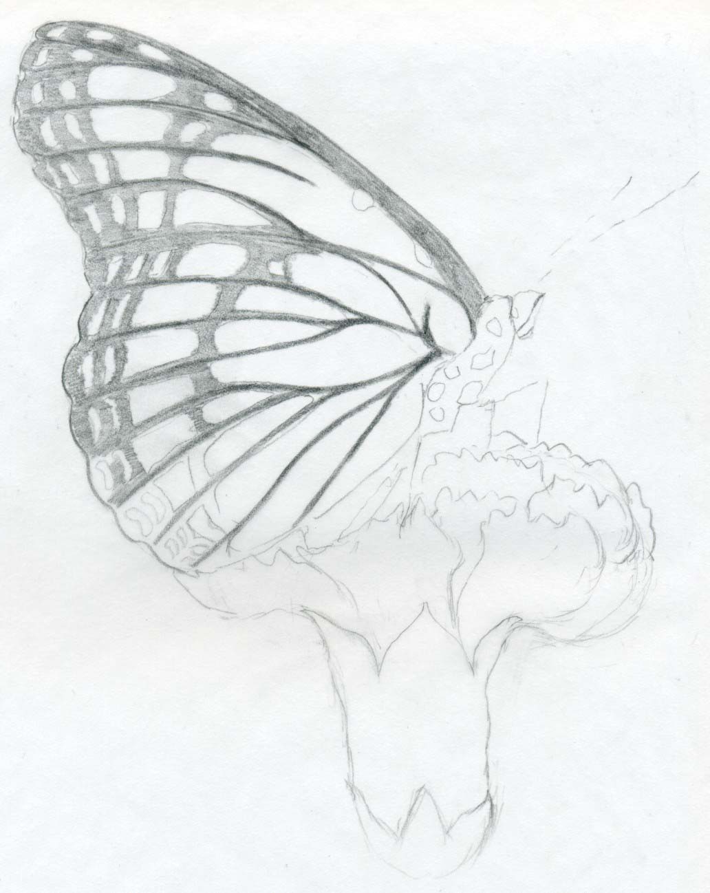 1032x1298 Simple Pencil Sketches Of Butterflies On Flowers Butterfly Pencil