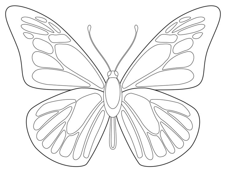 736x557 Drawn pice butterfly