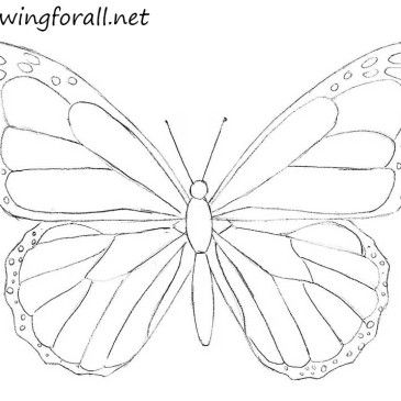 365x365 How to Draw a Butterfly for Beginners Crafty stuff Pinterest