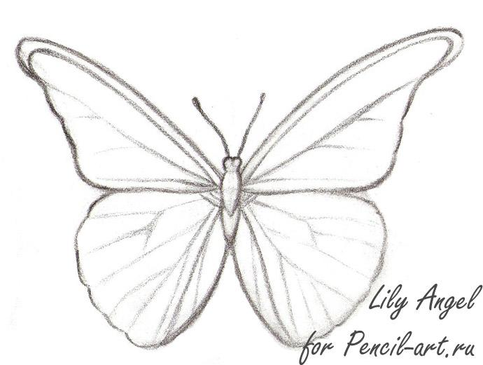 690x521 How to draw a butterfly of Morpho Anaxibia with a pencil step by step