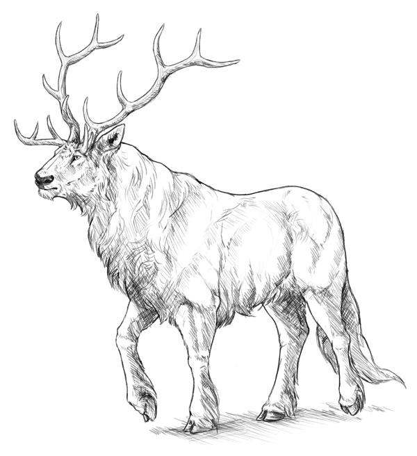 600x656 Drawn Elk Simple
