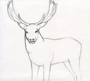 302x273 Drawn Stag Step By Step