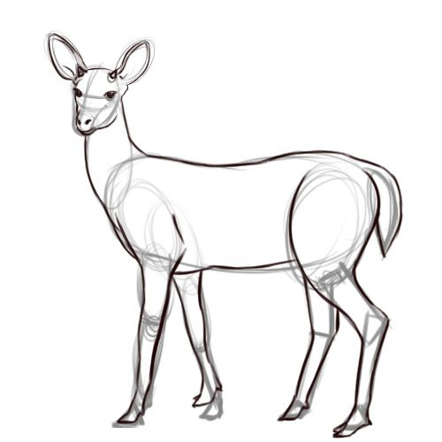 500x500 How To Draw A Deer (With Pictures)