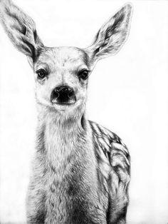 236x314 Pencil Drawings Pencil Drawing Deer