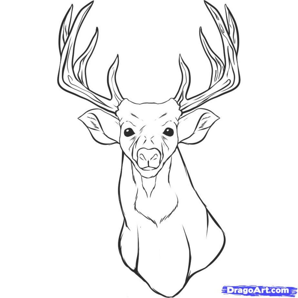 1024x1024 Realistic Deer Drawings Pencil Drawings Pencil Drawing Deer