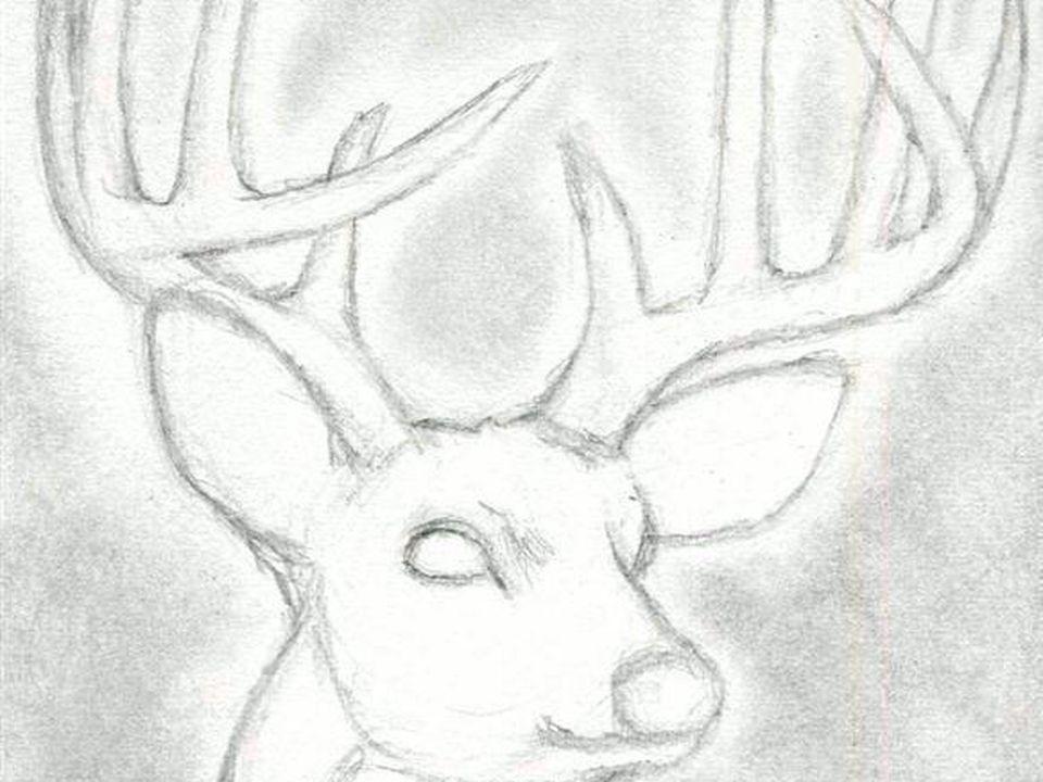 Pencil Drawing Of Deer At Getdrawings