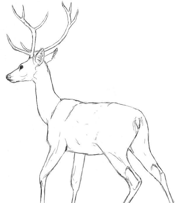628x696 Drawn Dear Dear Animal