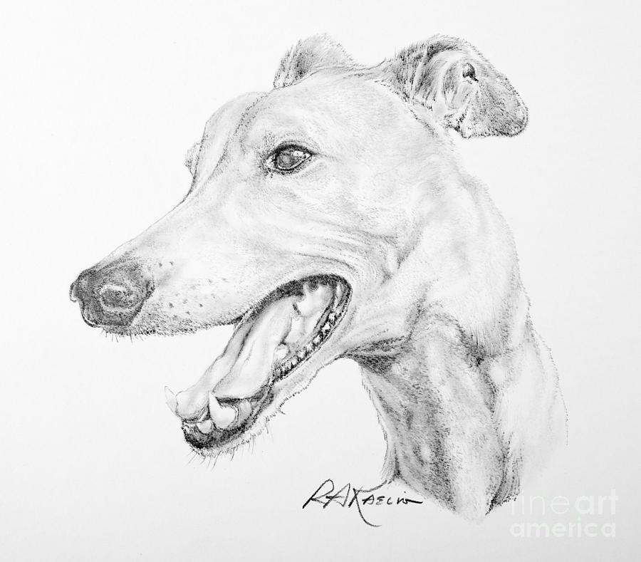 900x789 Greyhound Drawing By Roy Anthony Kaelin