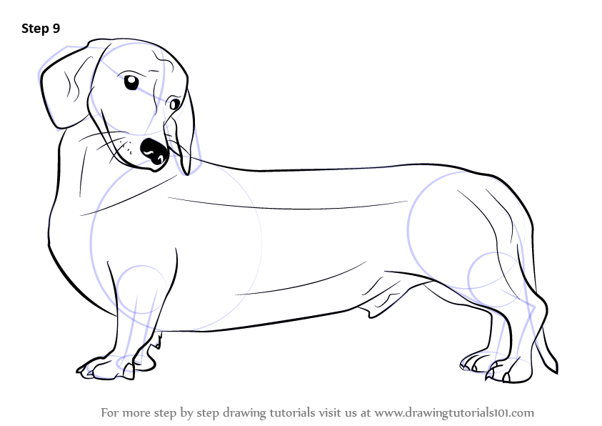 843x596 Learn How To Draw A Wiener Dog (Dogs) Step By Step Drawing Tutorials
