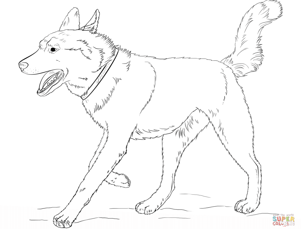 1048x800 Siberian Husky Coloring Page Pencil Drawing Free Printable Pages