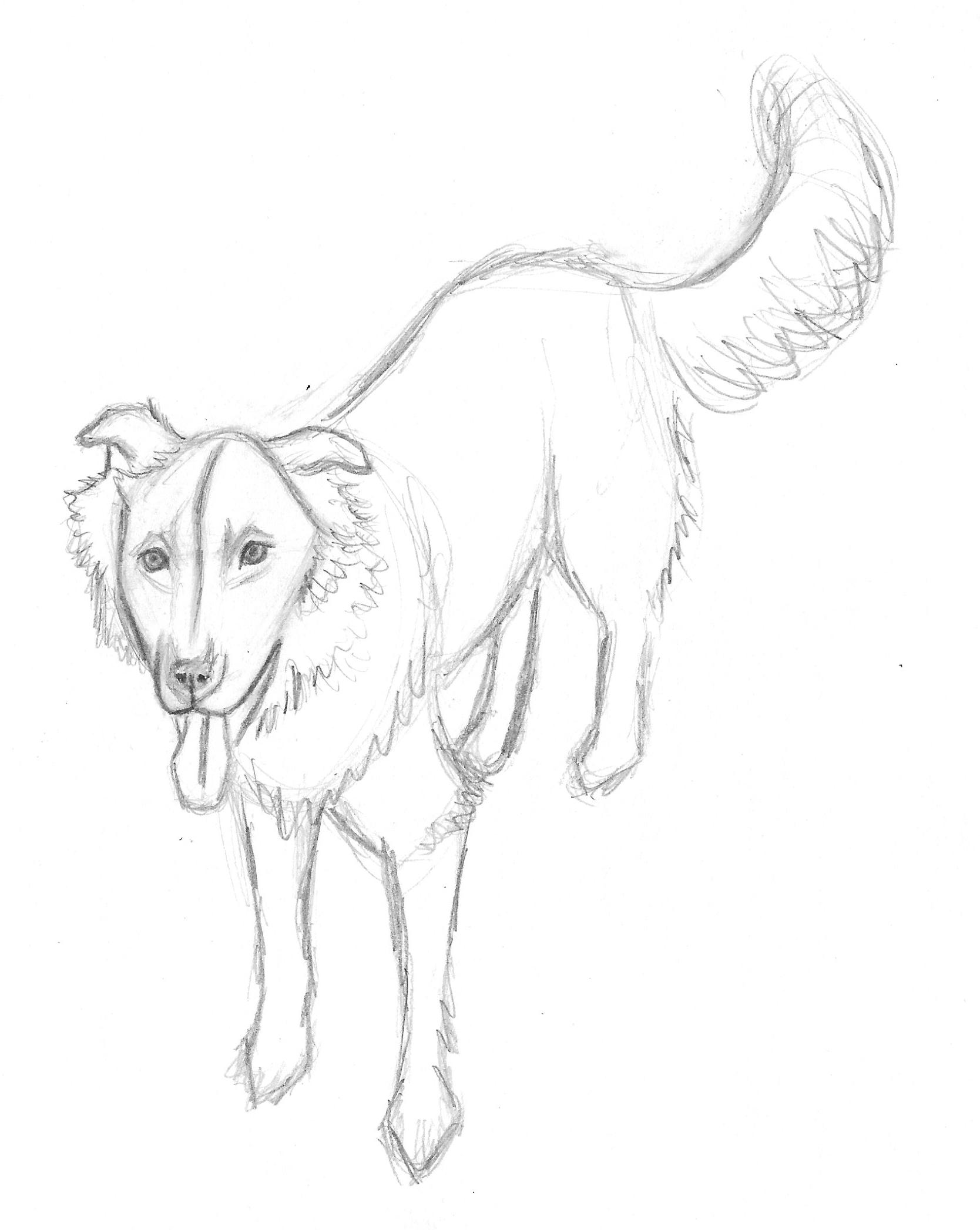 1668x2094 Drawing American Dog Blog