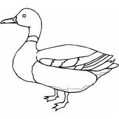 236x236 Drawn Duckling