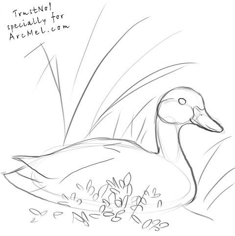480x481 How To Draw A Duck Step 3 Art Art Google, Animal