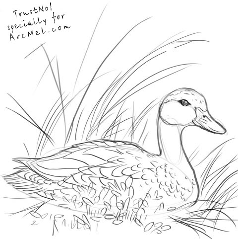 480x481 How To Draw A Duck Step By Step