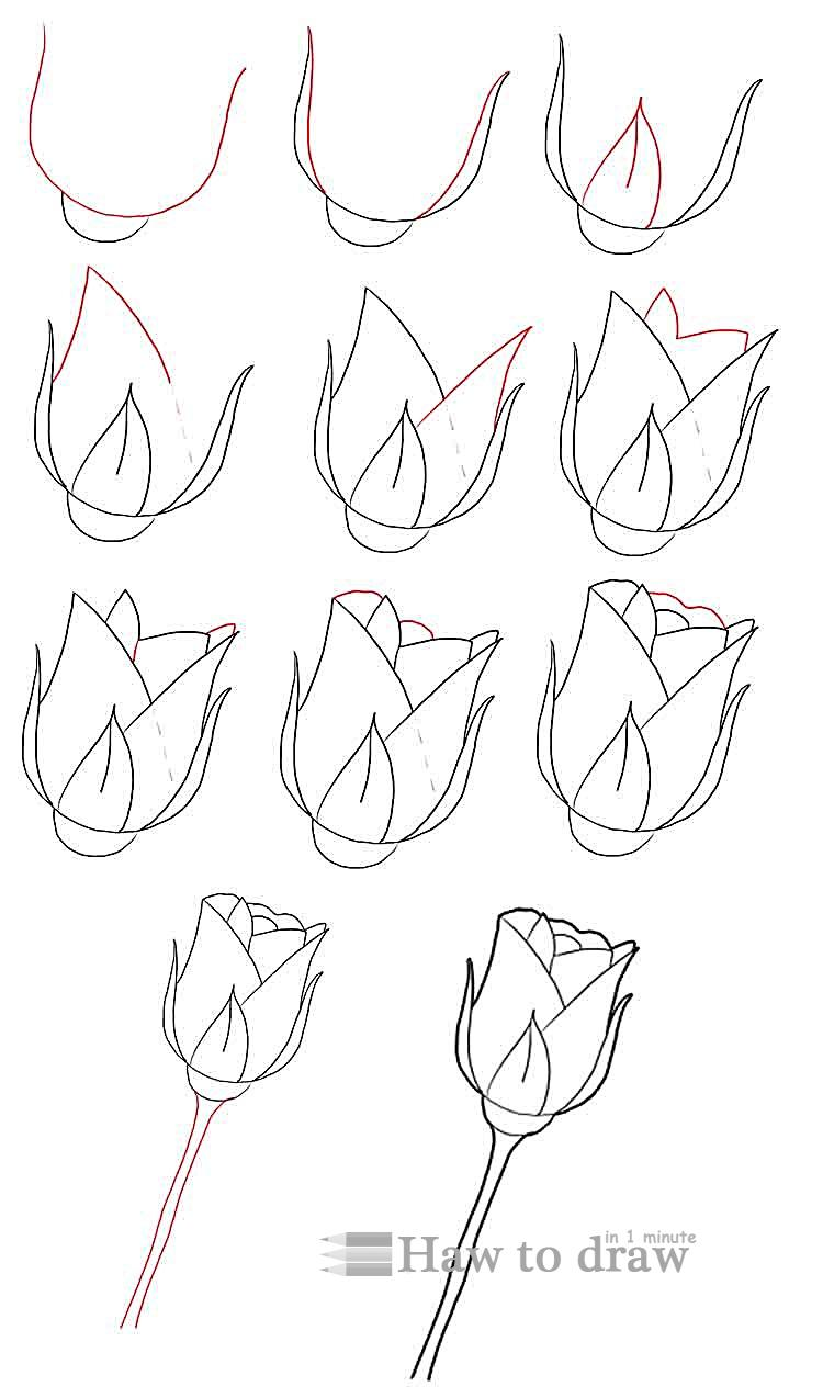 750x1274 Hoontoidly Rose Drawings In Pencil Step By Step Images