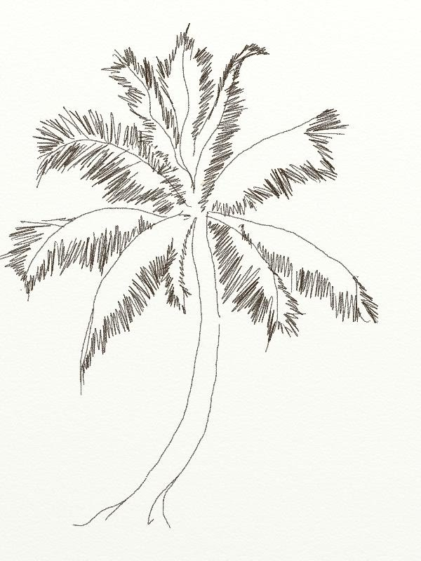 600x800 How To Draw A Coconut Tree In Easy Steps