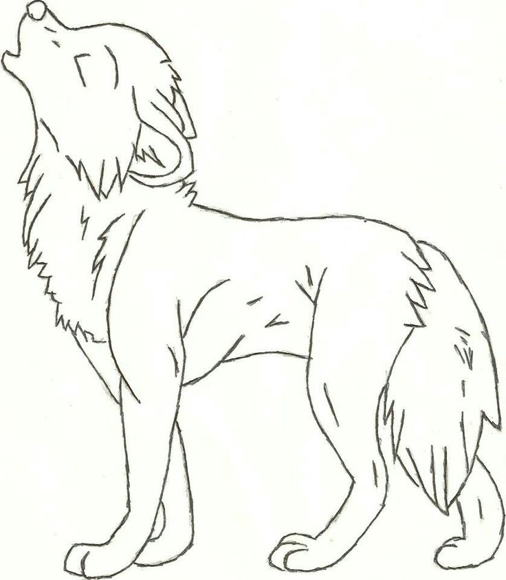 Pencil Drawing Of Wolf At Getdrawings Com Free For Personal Use