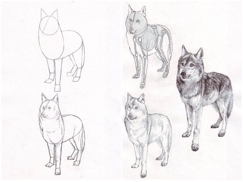 Ebook amp video tutoria wolves drawings author veri