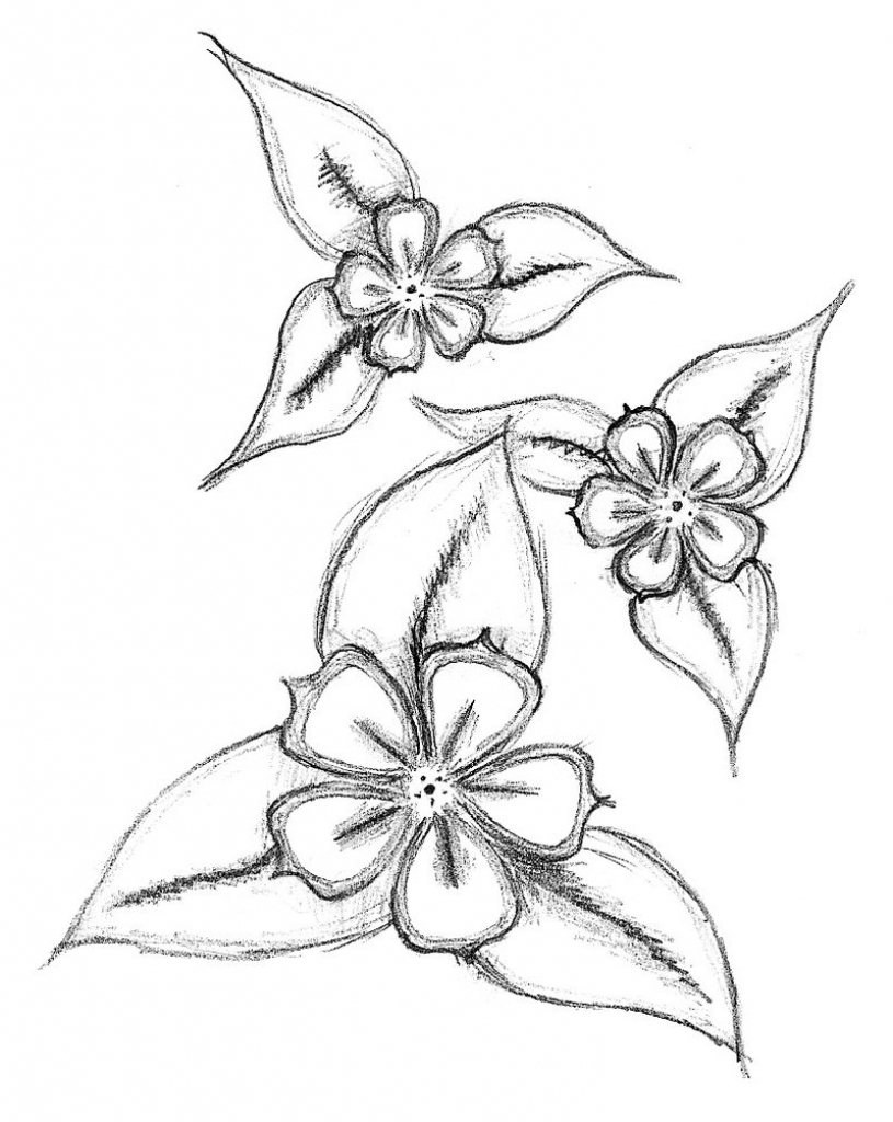 815x1024 Flowers Drawings In Pencil Step By Step Simple Flower Drawing Free