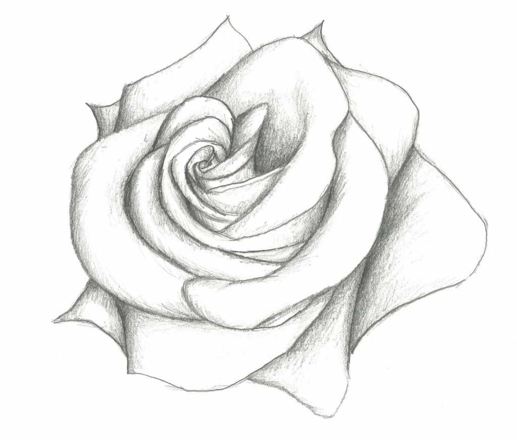 1024x876 Pencil Drawings Of Roses Step By Step Rose Flower Drawing Free