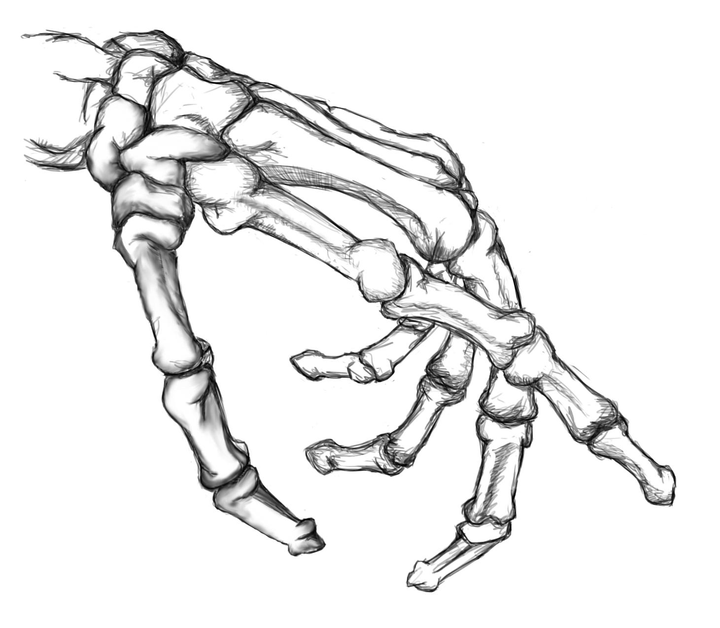 1461x1275 Skeleton Hands Drawing Drawn Hand Skeleton