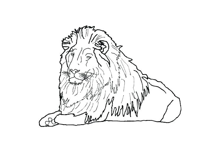 710x533 Lion Drawing Outline Lion Outline By Lion Pencil Drawing Outline