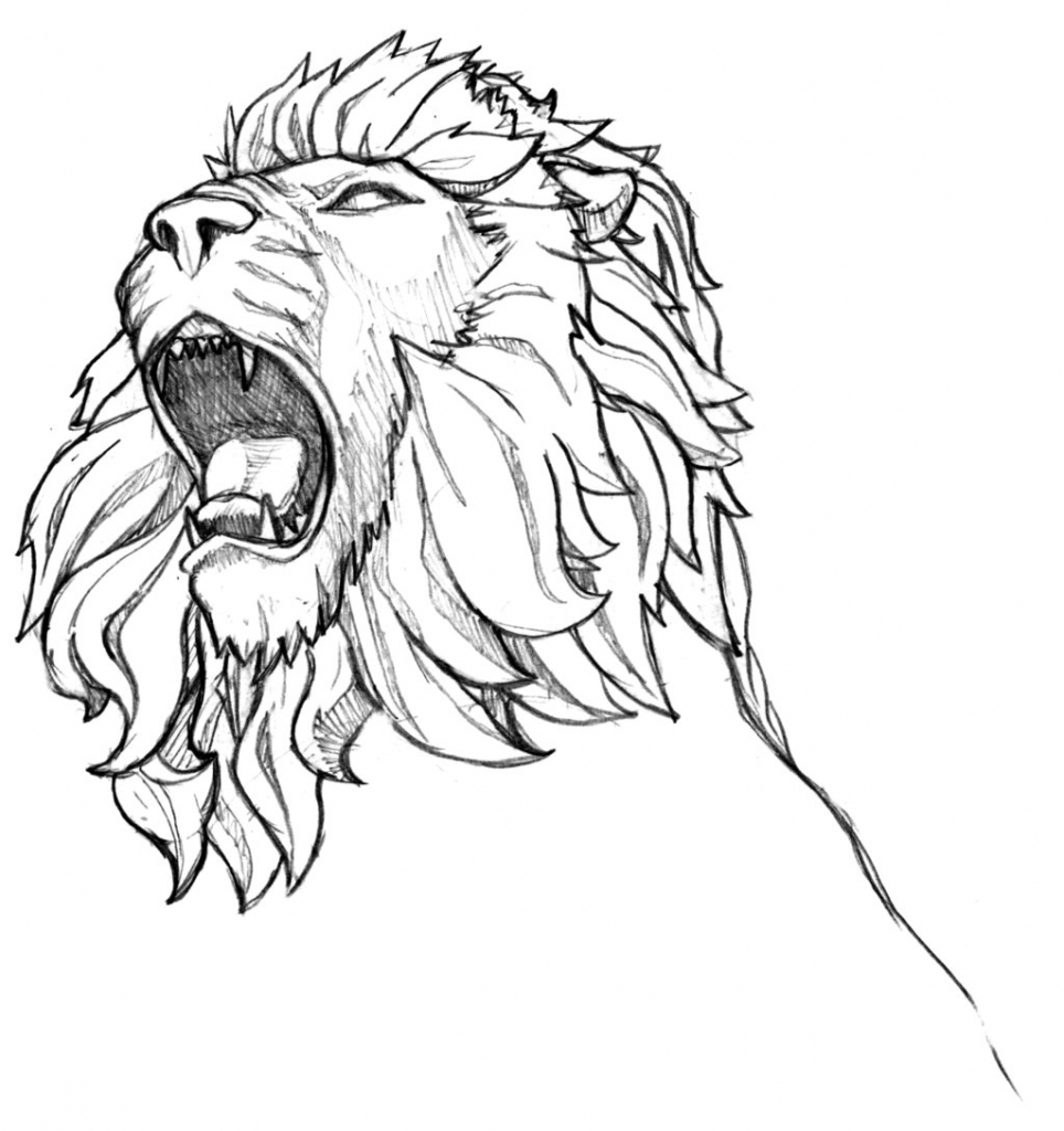 964x1024 Drawings Of Lions Male Lion Head Unfinished Thespecialhead