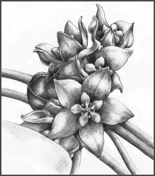 Pencil Still Life Drawing
