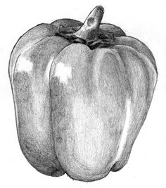 pencil still life drawing at getdrawings com free for personal use