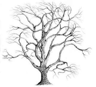 322x291 Drawings Of Oak Trees In Pencil