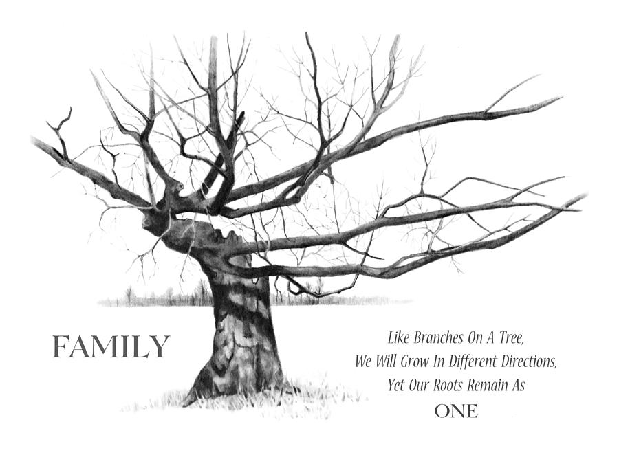 900x678 Family Tree Drawing By Joyce Geleynse