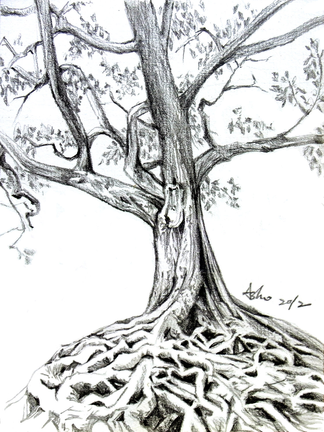 1124x1500 How To Draw Trees In Pencil Is A Question By Many Of The Beginners