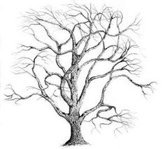 236x213 Image Result For Drawing Trees Pencil Tutorial How To Draw