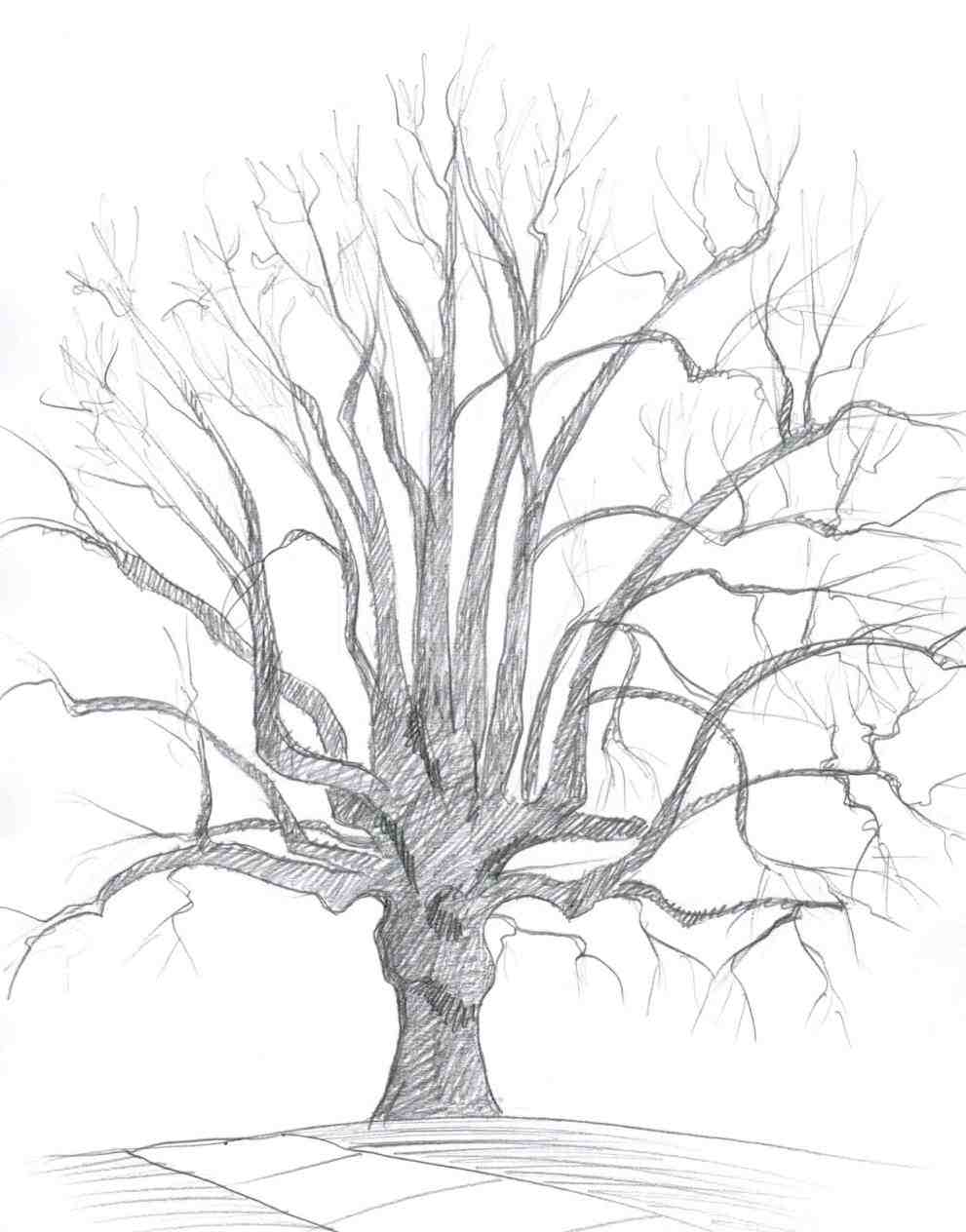 991x1264 Of Trees Art U Skethes Twisted Tree By Christmas Crafts For Kids
