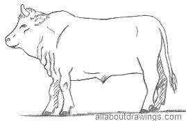 268x175 Bull Drawings In Pencil