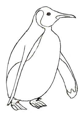 260x370 How To Draw An Emperor Penguin, Step 5 Drawings