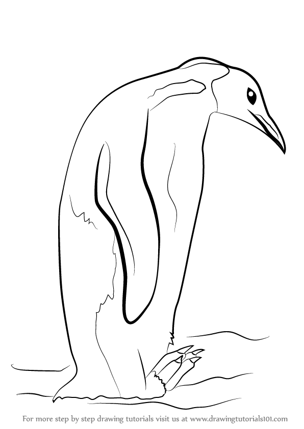 596x842 Learn How To Draw An Emperor Penguin (Antarctic Animals) Step By